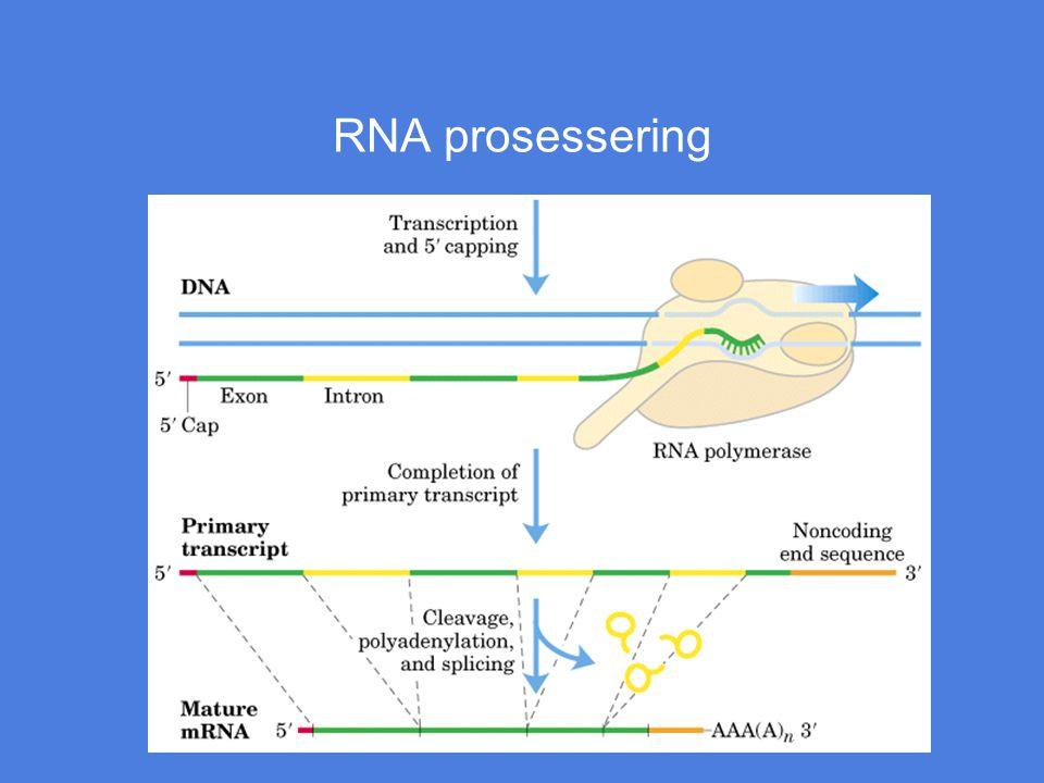 RNA prosessering