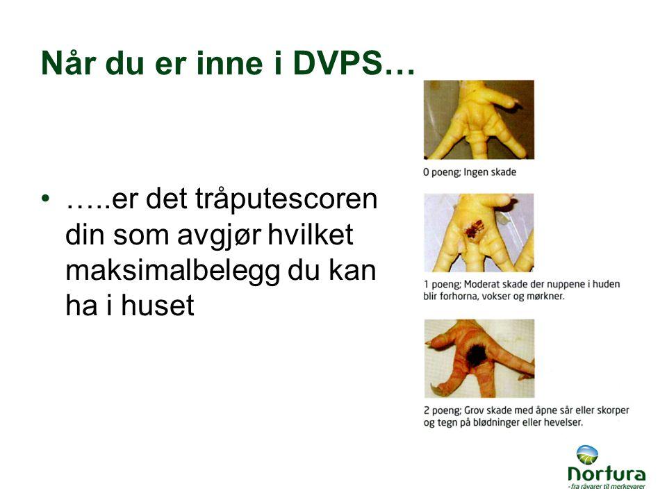 Når du er inne i DVPS… …..er det tråputescoren din som avgjør hvilket maksimalbelegg du kan ha i huset
