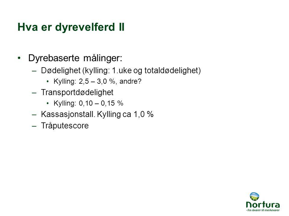 Hva er dyrevelferd II Dyrebaserte målinger: –Dødelighet (kylling: 1.uke og totaldødelighet) Kylling: 2,5 – 3,0 %, andre.