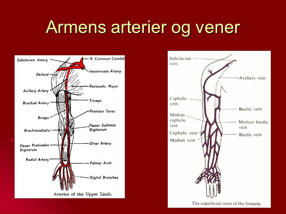 Armens arterier og vener