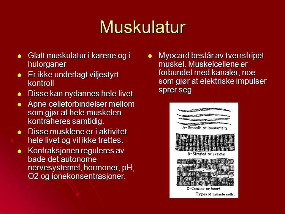 Muskulatur Glatt muskulatur i karene og i hulorganer Glatt muskulatur i karene og i hulorganer Er ikke underlagt viljestyrt kontroll Er ikke underlagt