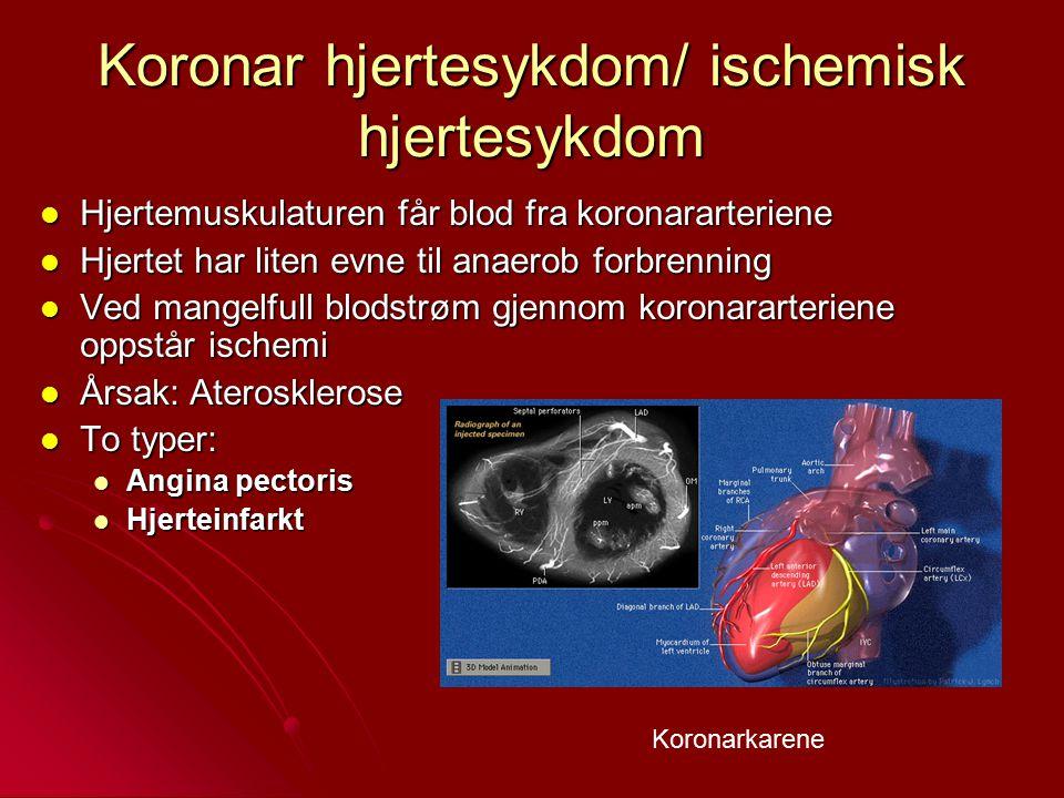 Koronar hjertesykdom/ ischemisk hjertesykdom Hjertemuskulaturen får blod fra koronararteriene Hjertemuskulaturen får blod fra koronararteriene Hjertet