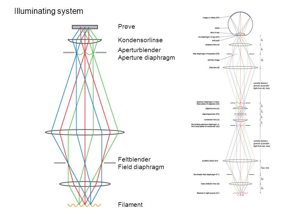 Illuminating system Prøve Filament Feltblender Field diaphragm Aperturblender Aperture diaphragm Kondensorlinse