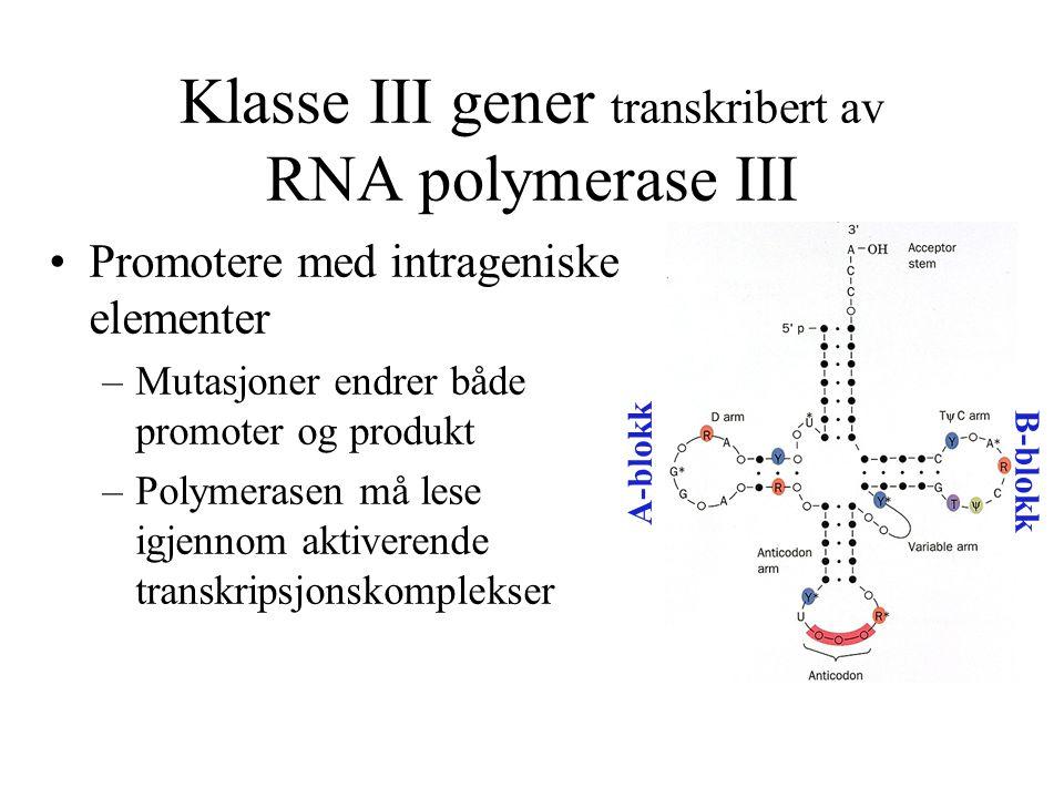 Klasse III gener transkribert av RNA polymerase III Promotere med intrageniske elementer –Mutasjoner endrer både promoter og produkt –Polymerasen må l