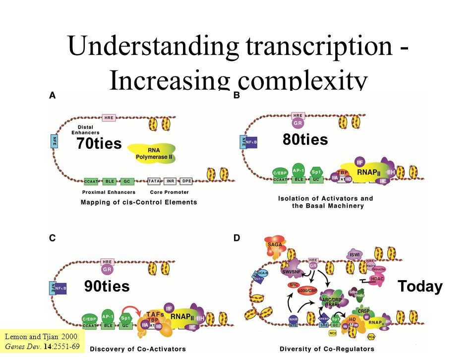 Understanding transcription - Increasing complexity 70ties 80ties 90tiesToday Lemon and Tjian 2000 Genes Dev.