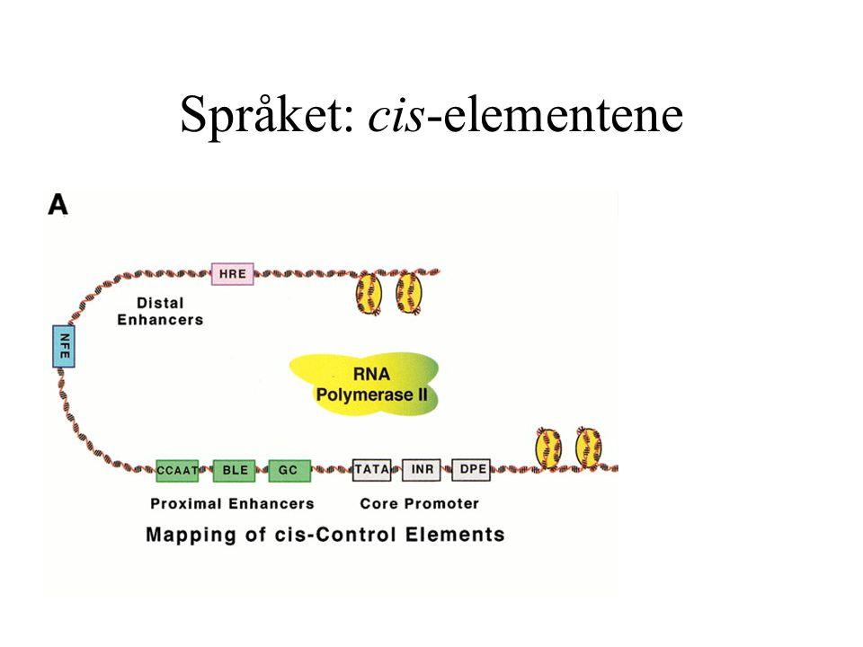 Språket: cis-elementene