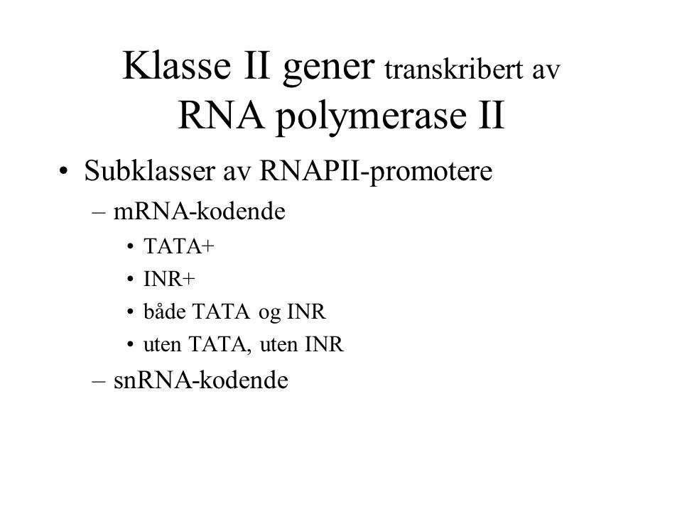 Klasse II gener transkribert av RNA polymerase II Subklasser av RNAPII-promotere –mRNA-kodende TATA+ INR+ både TATA og INR uten TATA, uten INR –snRNA-