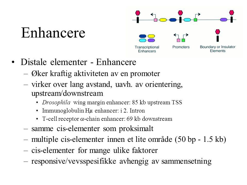 Enhancere Distale elementer - Enhancere –Øker kraftig aktiviteten av en promoter –virker over lang avstand, uavh. av orientering, upstream/downstream