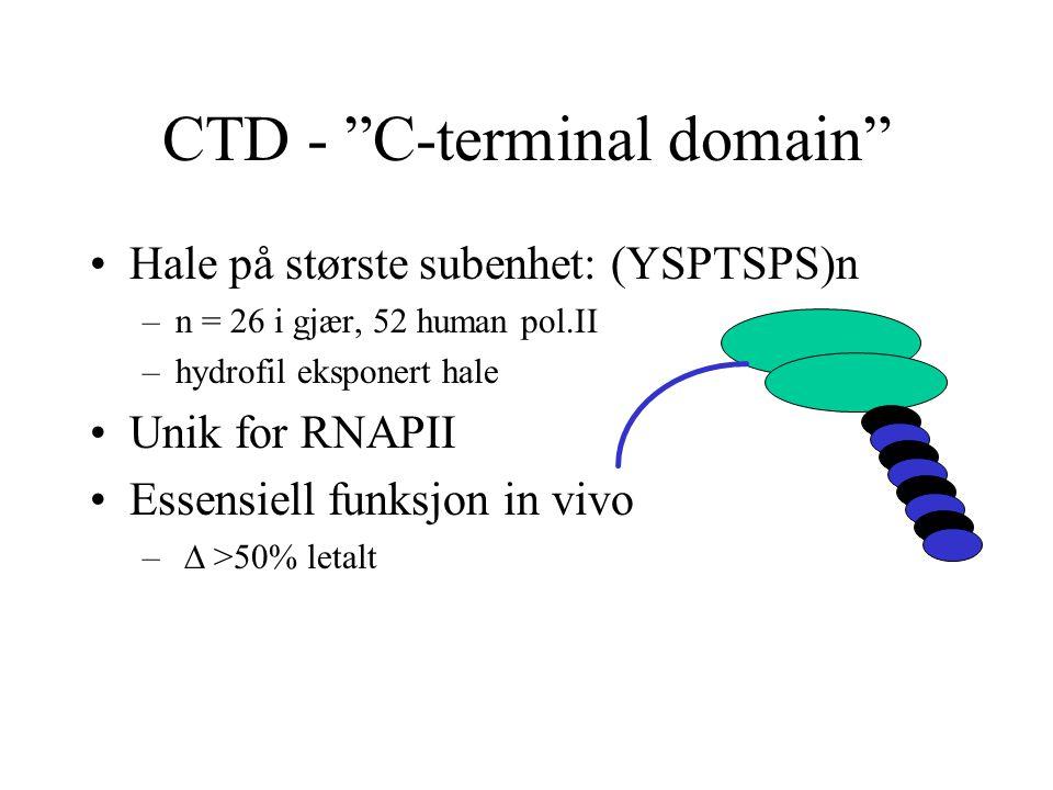 "CTD - ""C-terminal domain"" Hale på største subenhet: (YSPTSPS)n –n = 26 i gjær, 52 human pol.II –hydrofil eksponert hale Unik for RNAPII Essensiell fun"