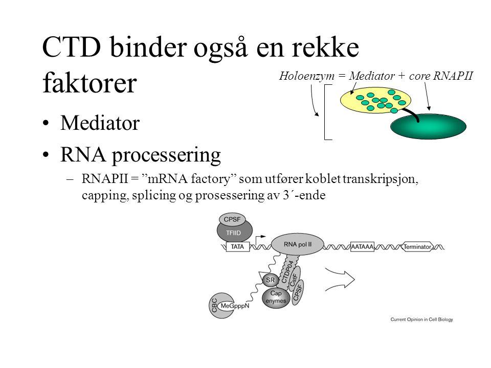 """CTD binder også en rekke faktorer Mediator RNA processering –RNAPII = """"mRNA factory"""" som utfører koblet transkripsjon, capping, splicing og prosesseri"""