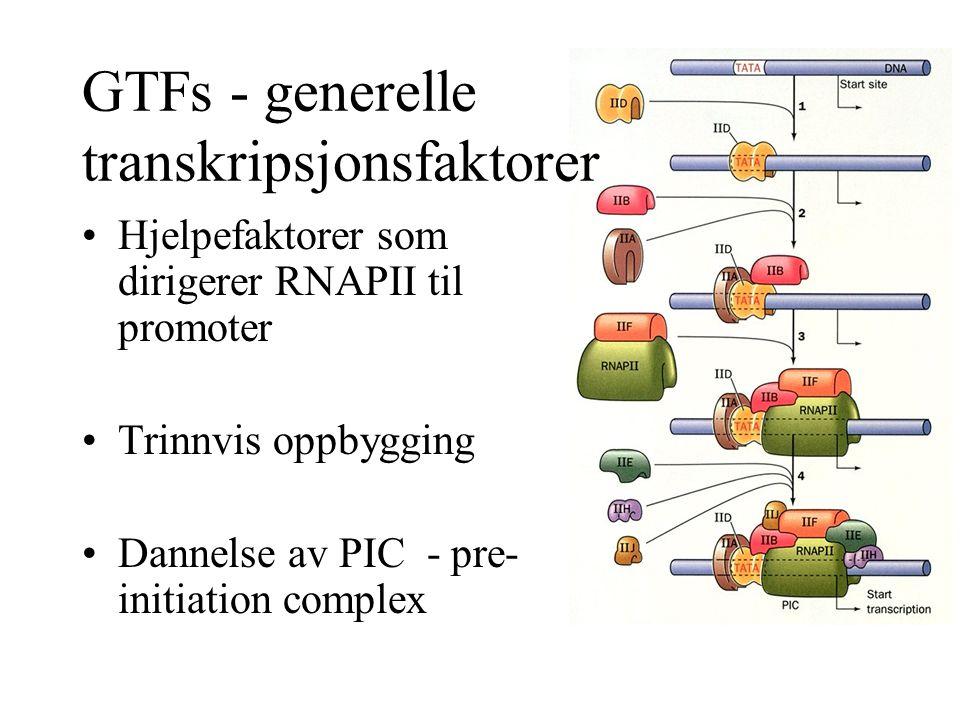 GTFs - generelle transkripsjonsfaktorer Hjelpefaktorer som dirigerer RNAPII til promoter Trinnvis oppbygging Dannelse av PIC - pre- initiation complex