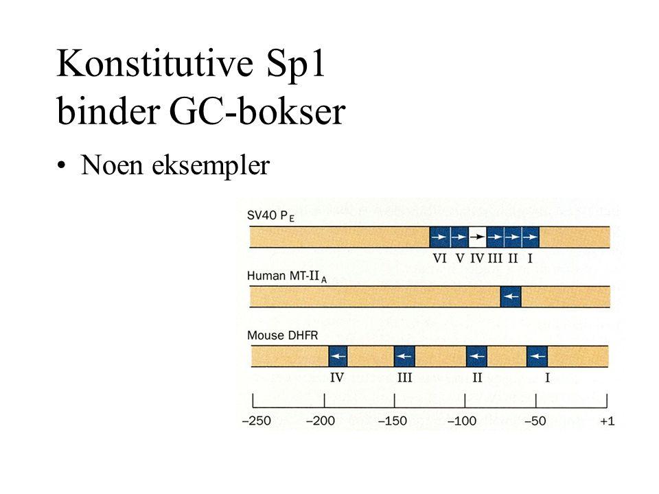 Konstitutive Sp1 binder GC-bokser Noen eksempler