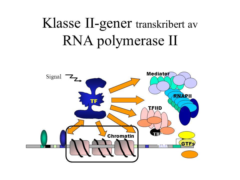 Klasse II-gener transkribert av RNA polymerase II TATA TFIID TBP TF RNAPII Mediator GTFs Chromatin Signal