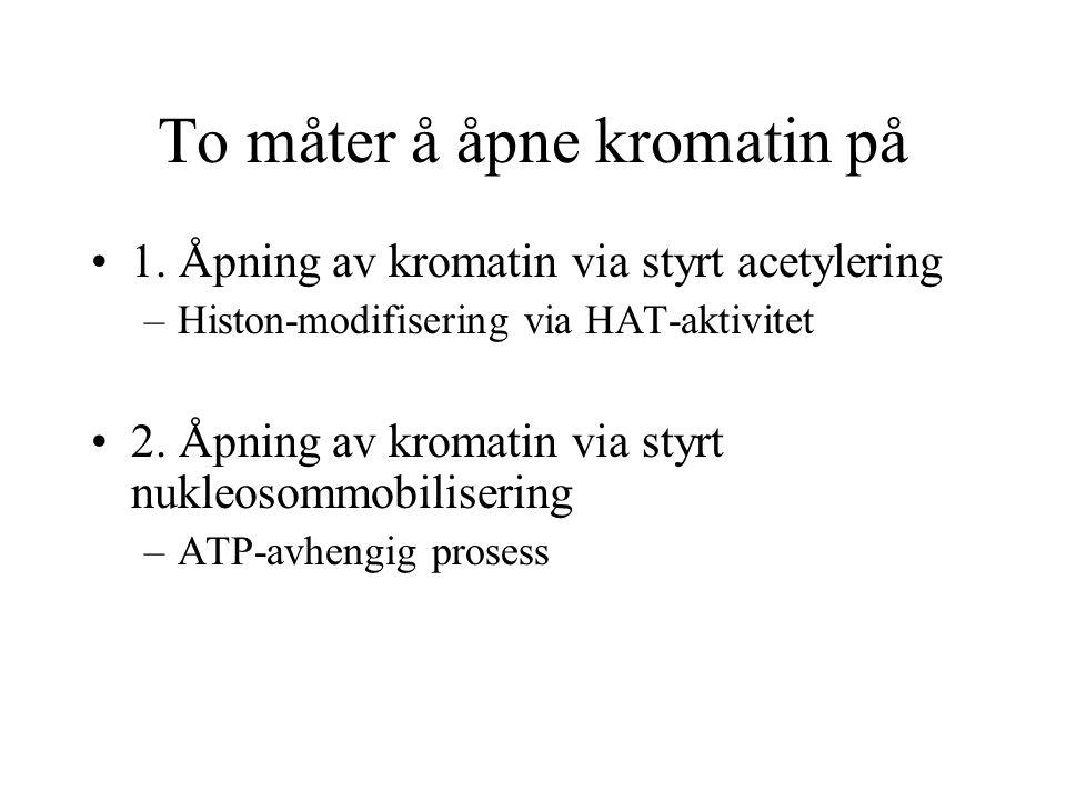 To måter å åpne kromatin på 1. Åpning av kromatin via styrt acetylering –Histon-modifisering via HAT-aktivitet 2. Åpning av kromatin via styrt nukleos