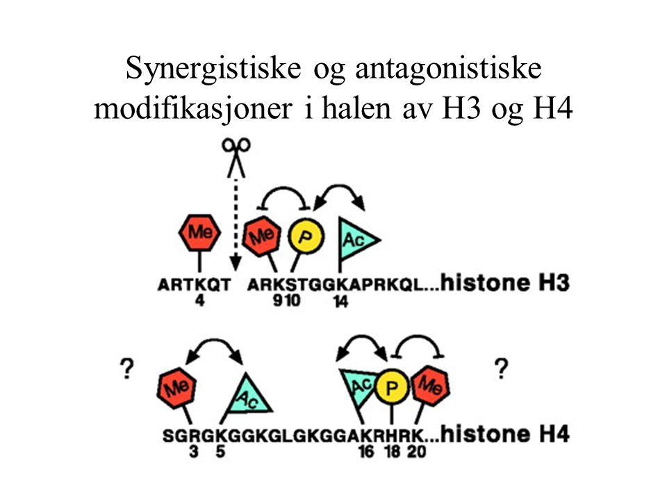 Synergistiske og antagonistiske modifikasjoner i halen av H3 og H4