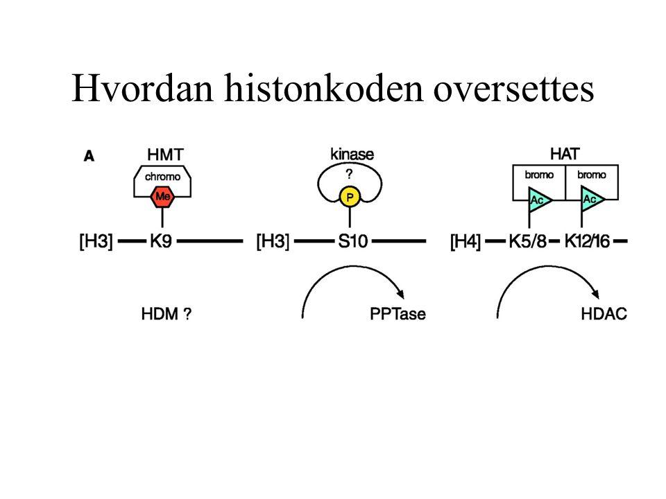 Hvordan histonkoden oversettes