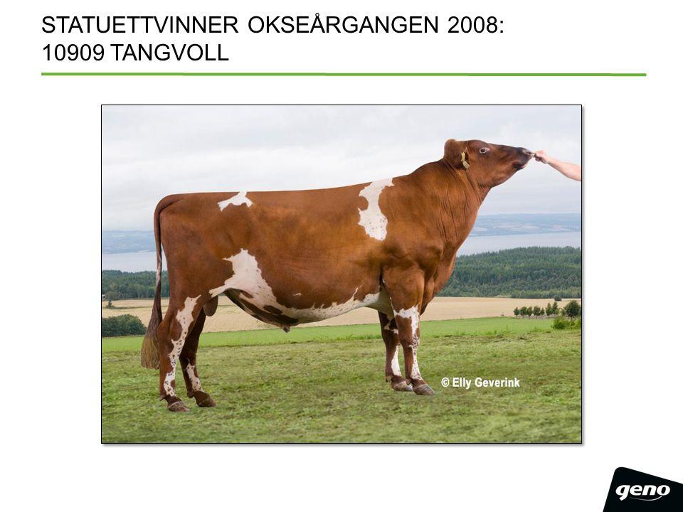 STATUETTVINNER OKSEÅRGANGEN 2008: 10909 TANGVOLL