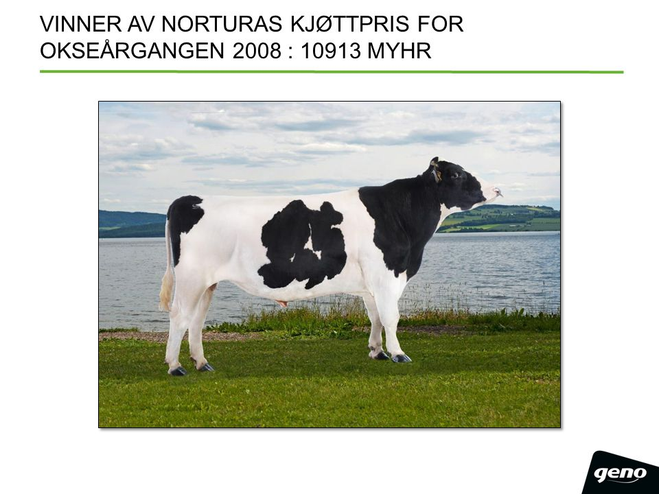 VINNER AV NORTURAS KJØTTPRIS FOR OKSEÅRGANGEN 2008 : 10913 MYHR