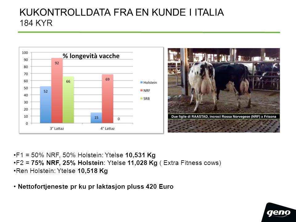 F1 = 50% NRF, 50% Holstein: Ytelse 10,531 Kg F2 = 75% NRF, 25% Holstein: Ytelse 11,028 Kg ( Extra Fitness cows) Ren Holstein: Ytelse 10,518 Kg Nettofo