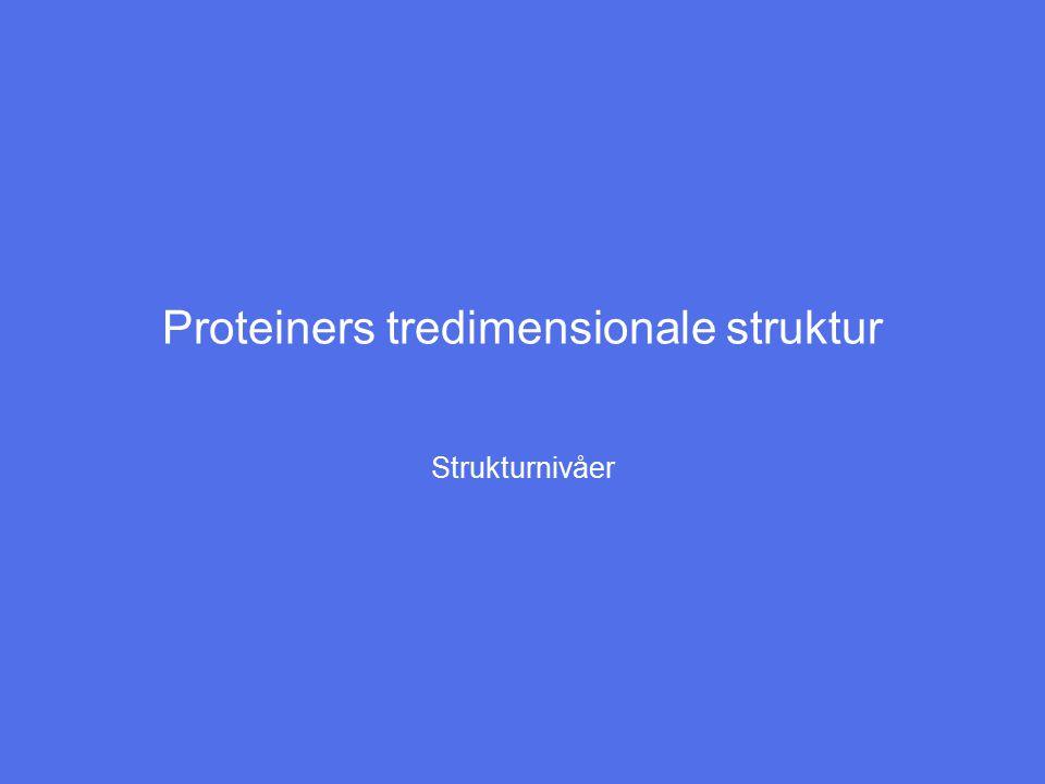 Proteiners tredimensionale struktur Strukturnivåer