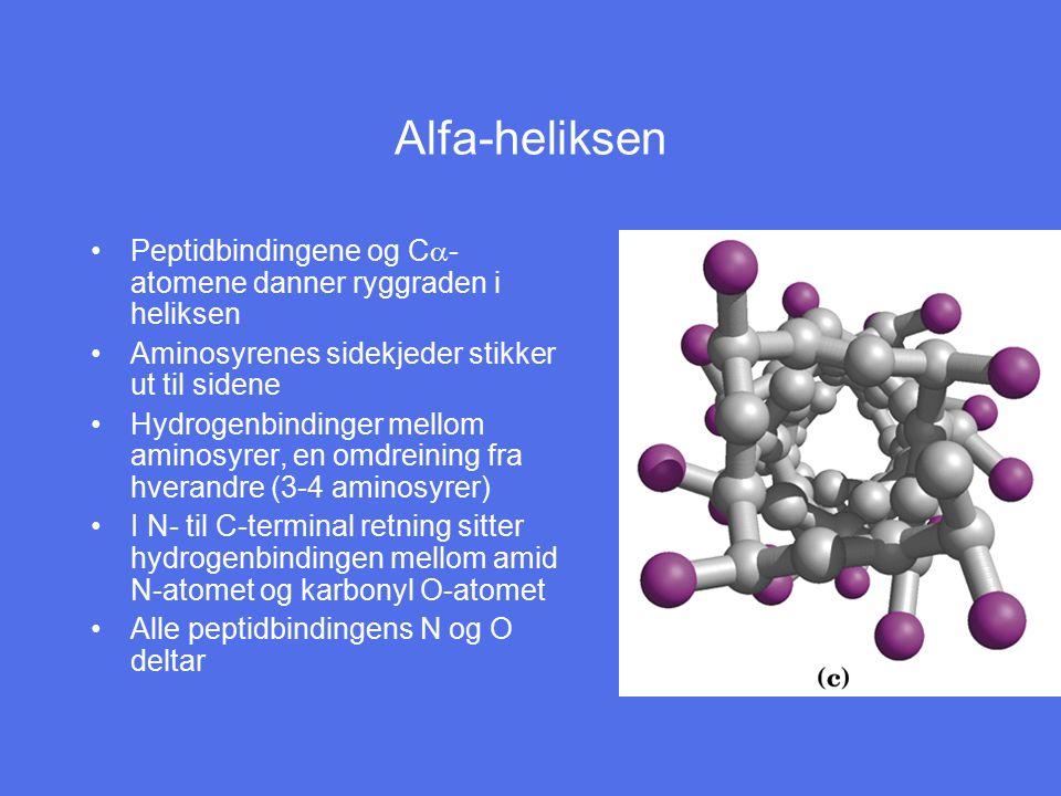 Alfa-heliksen Peptidbindingene og C  - atomene danner ryggraden i heliksen Aminosyrenes sidekjeder stikker ut til sidene Hydrogenbindinger mellom ami