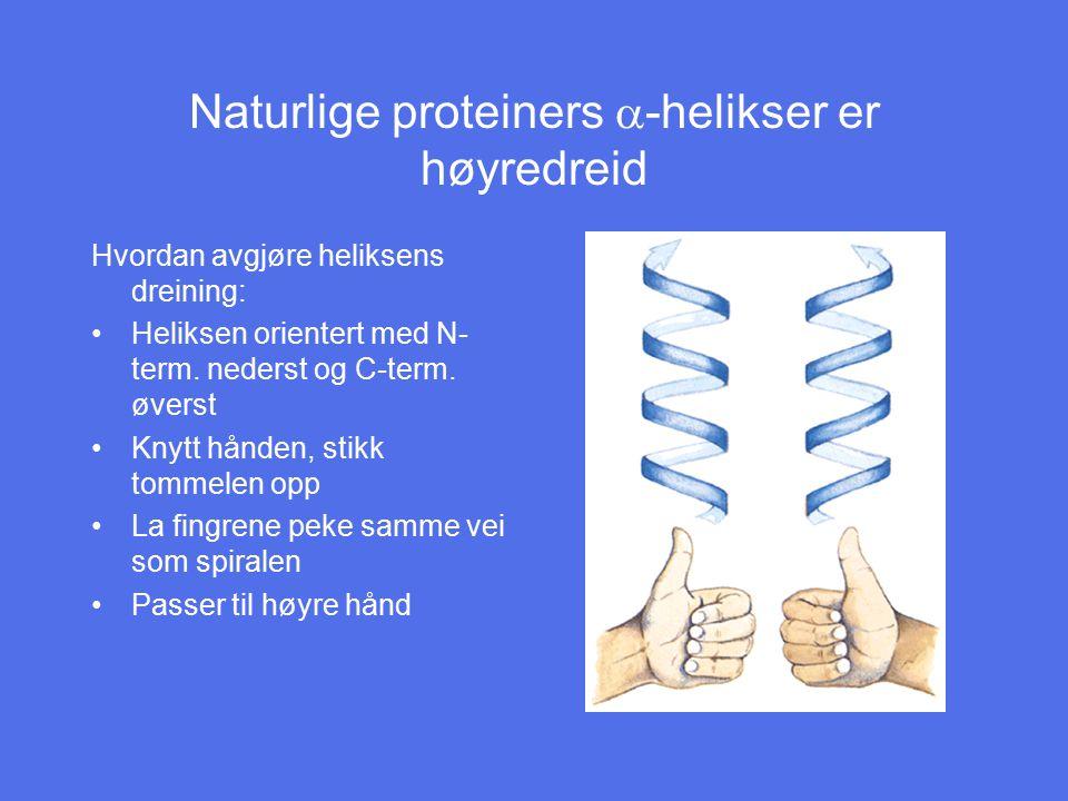 Naturlige proteiners  -helikser er høyredreid Hvordan avgjøre heliksens dreining: Heliksen orientert med N- term. nederst og C-term. øverst Knytt hån