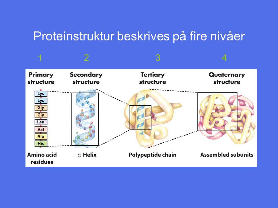 Proteinstruktur beskrives på fire nivåer 1 2 3 4