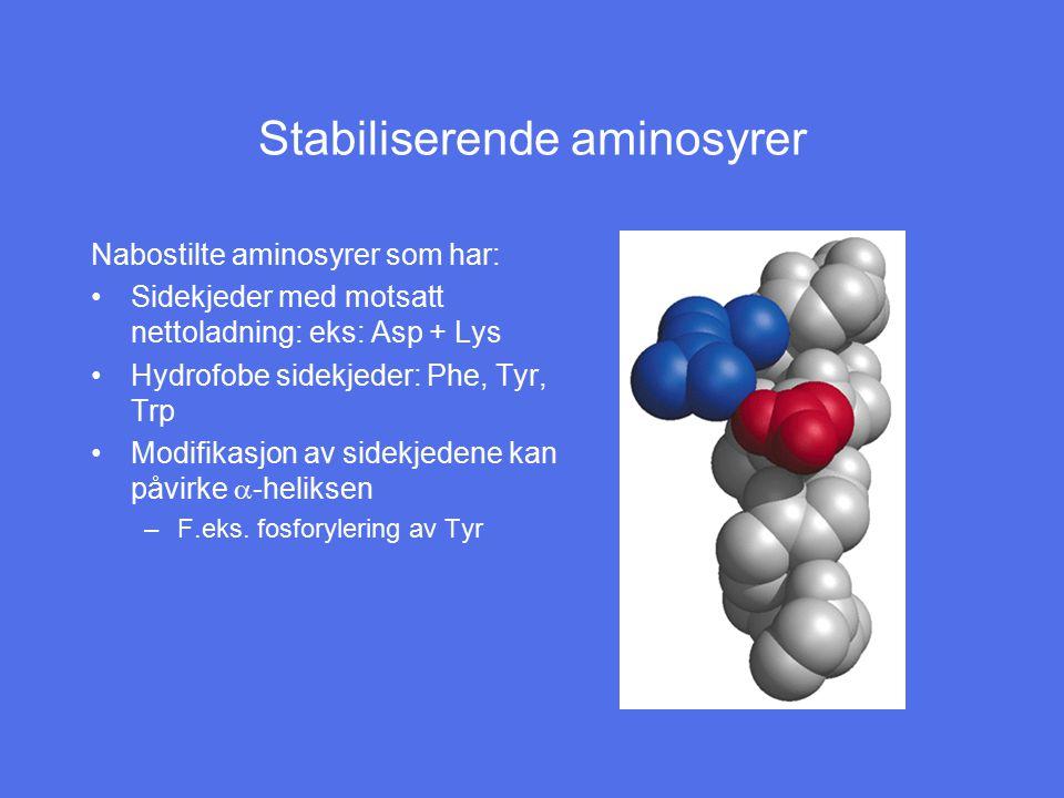 Stabiliserende aminosyrer Nabostilte aminosyrer som har: Sidekjeder med motsatt nettoladning: eks: Asp + Lys Hydrofobe sidekjeder: Phe, Tyr, Trp Modif