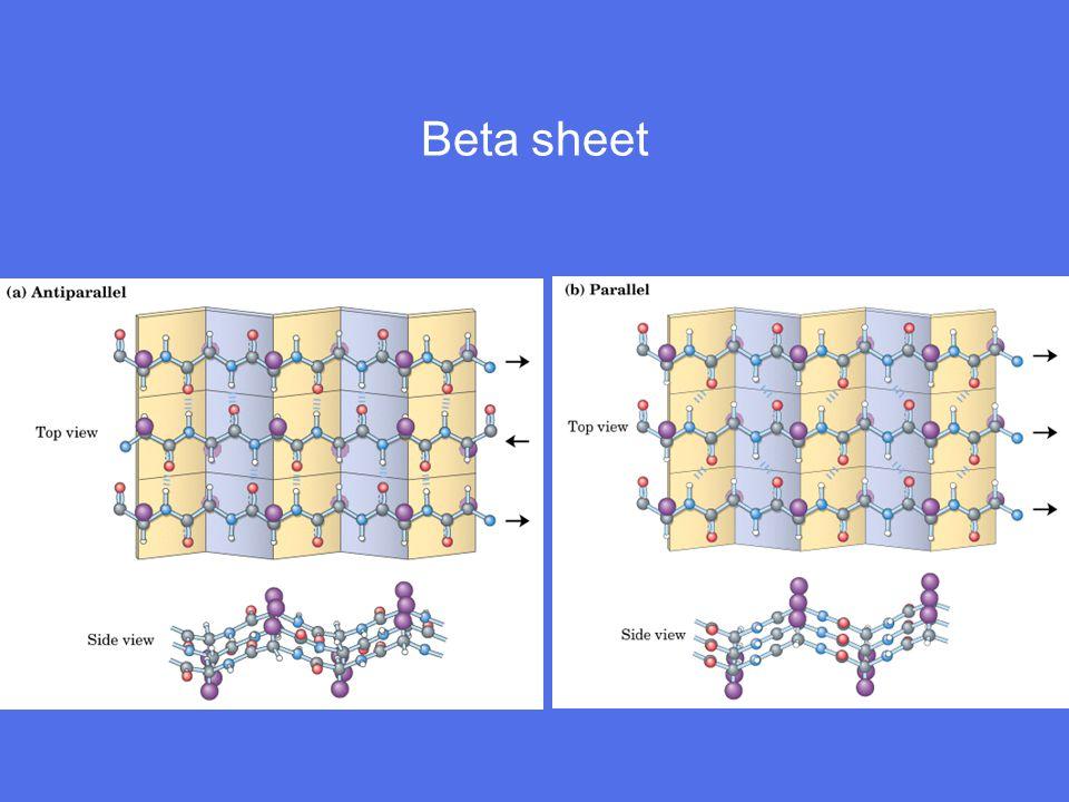 Beta sheet