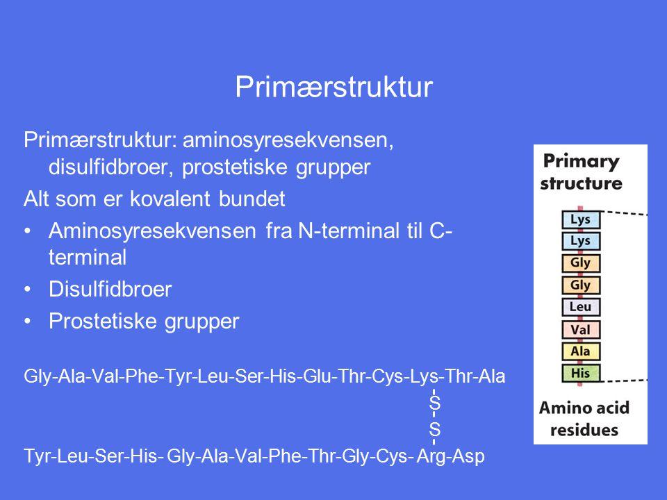 Primærstruktur Primærstruktur: aminosyresekvensen, disulfidbroer, prostetiske grupper Alt som er kovalent bundet Aminosyresekvensen fra N-terminal til