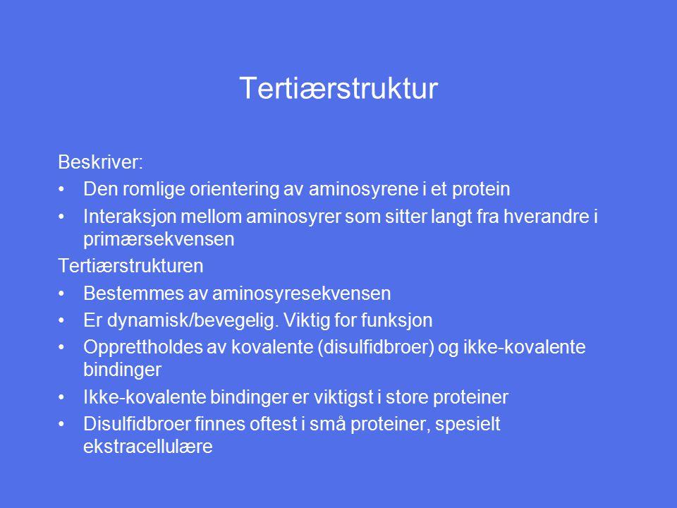 Tertiærstruktur Beskriver: Den romlige orientering av aminosyrene i et protein Interaksjon mellom aminosyrer som sitter langt fra hverandre i primærse