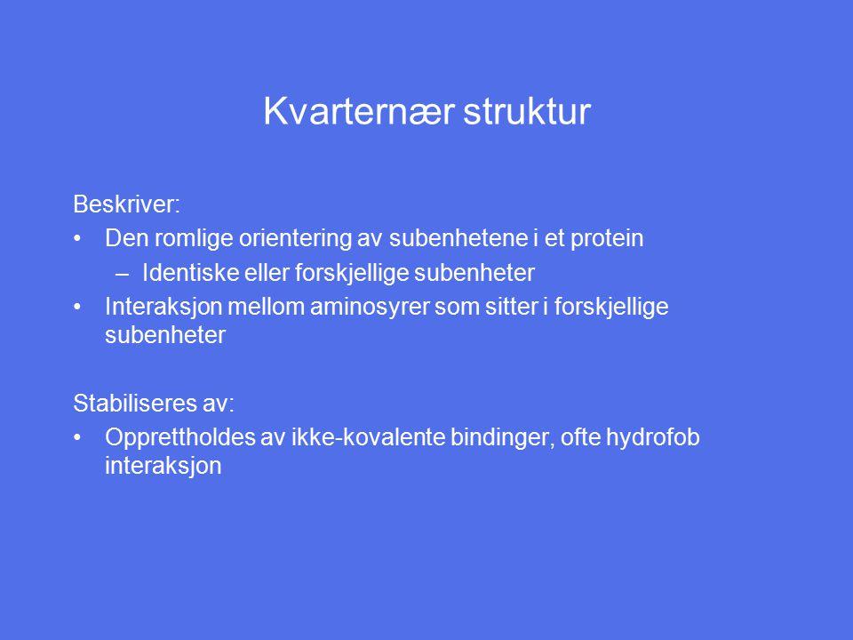 Kvarternær struktur Beskriver: Den romlige orientering av subenhetene i et protein –Identiske eller forskjellige subenheter Interaksjon mellom aminosy