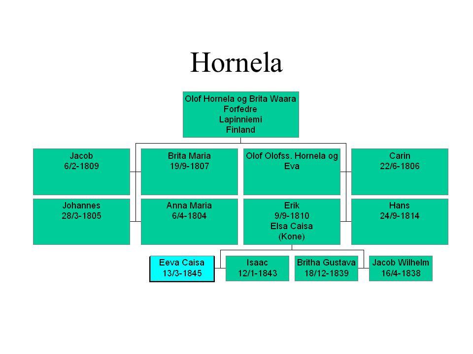 Hornela