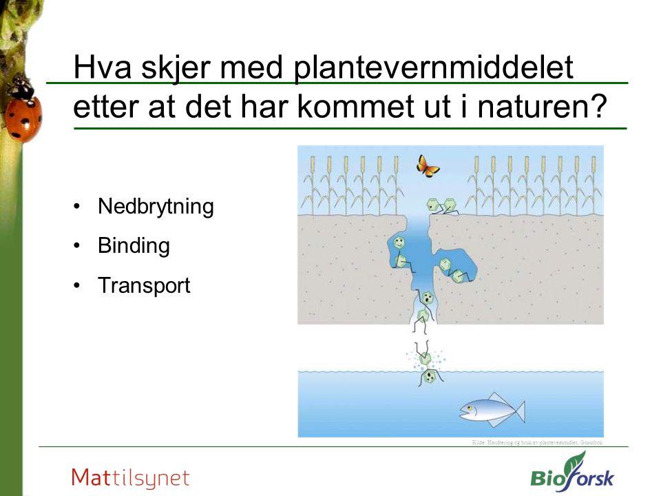 Hva skjer med plantevernmiddelet etter at det har kommet ut i naturen? Nedbrytning Binding Transport Kilde: Handtering og bruk av plantevernmidler, Gr