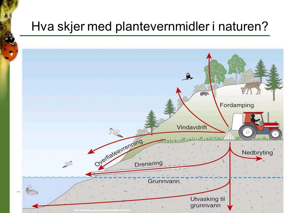 Hva skjer med plantevernmidler i naturen? Kilde: Handtering og bruk av plantevernmidler, Grunnbok