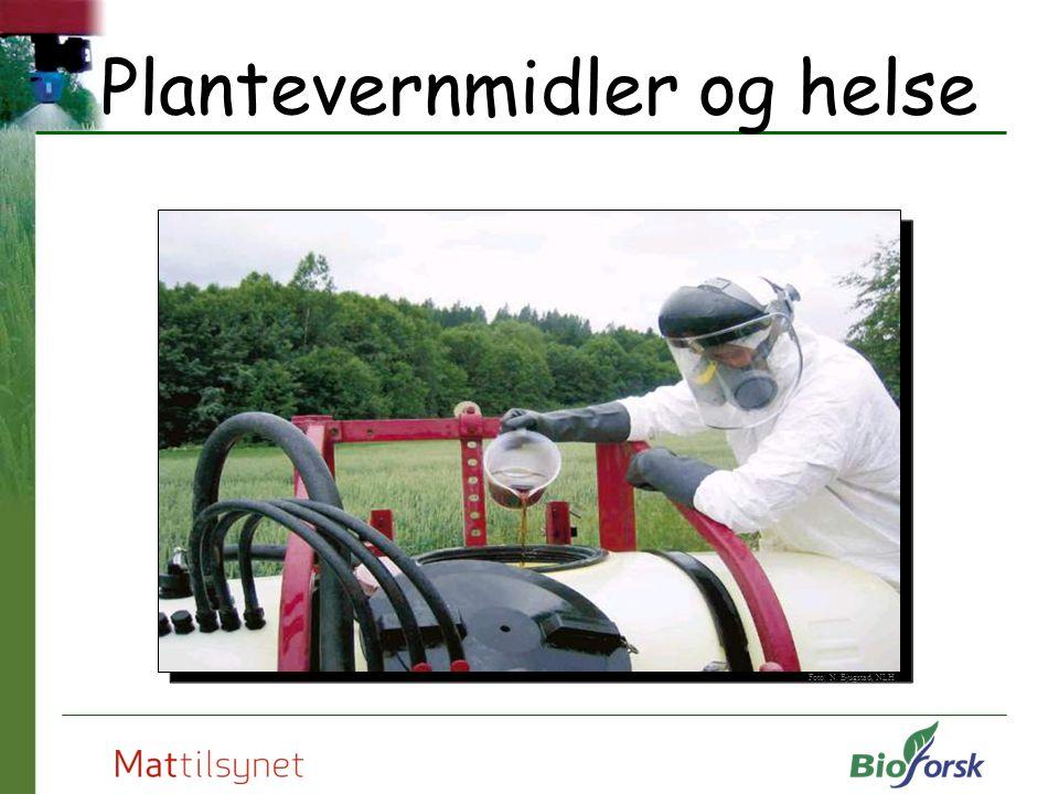 Plantevernmidler og helse Foto: N. Bjugstad, NLH