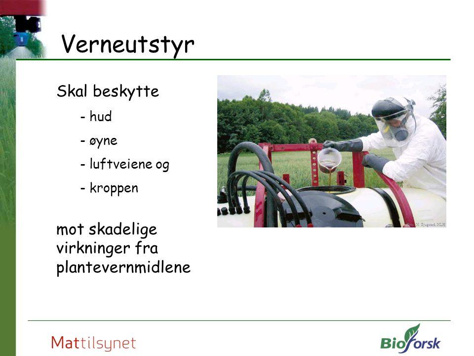 Verneutstyr Skal beskytte - hud - øyne - luftveiene og - kroppen mot skadelige virkninger fra plantevernmidlene Foto: N. Bjugstad, NLH
