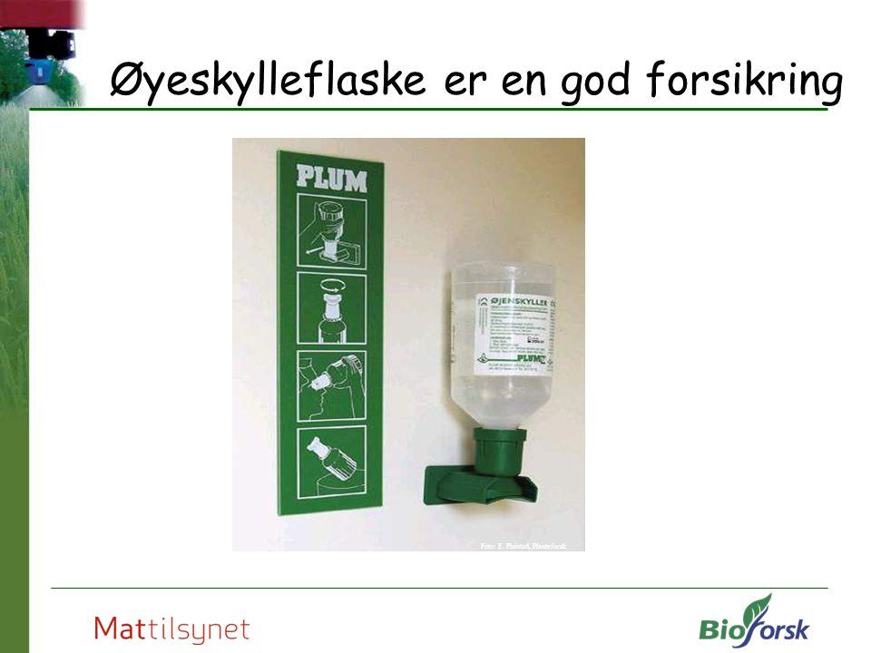 Øyeskylleflaske er en god forsikring Foto: E. Fløistad, Planteforsk