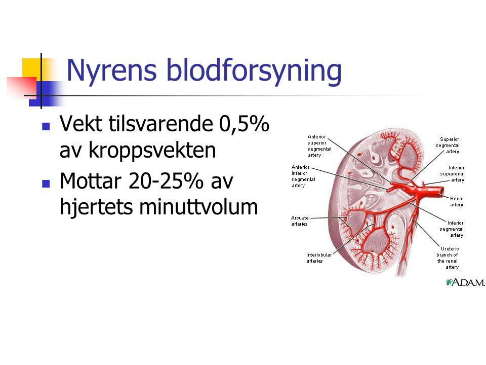 Nyrens blodforsyning Vekt tilsvarende 0,5% av kroppsvekten Mottar 20-25% av hjertets minuttvolum