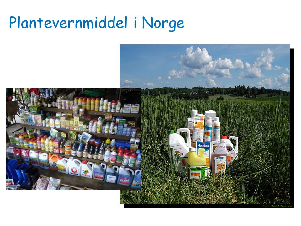 Foto E. Fløistad, Planteforsk Plantevernmiddel i Norge