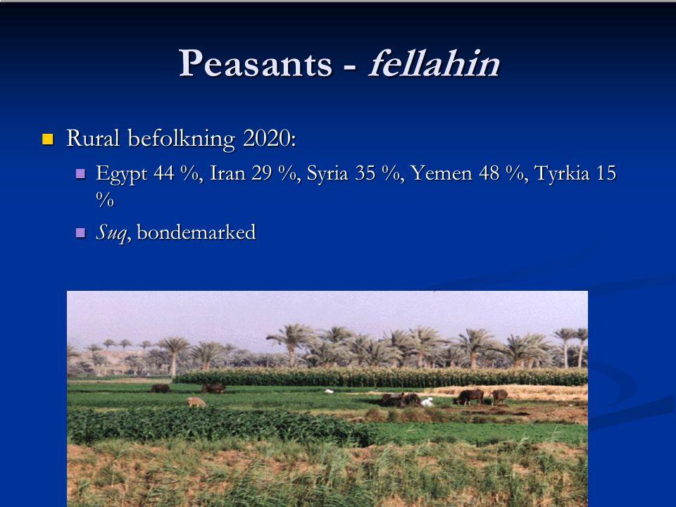 Peasants - fellahin Rural befolkning 2020: Rural befolkning 2020: Egypt 44 %, Iran 29 %, Syria 35 %, Yemen 48 %, Tyrkia 15 % Egypt 44 %, Iran 29 %, Syria 35 %, Yemen 48 %, Tyrkia 15 % Suq, bondemarked Suq, bondemarked