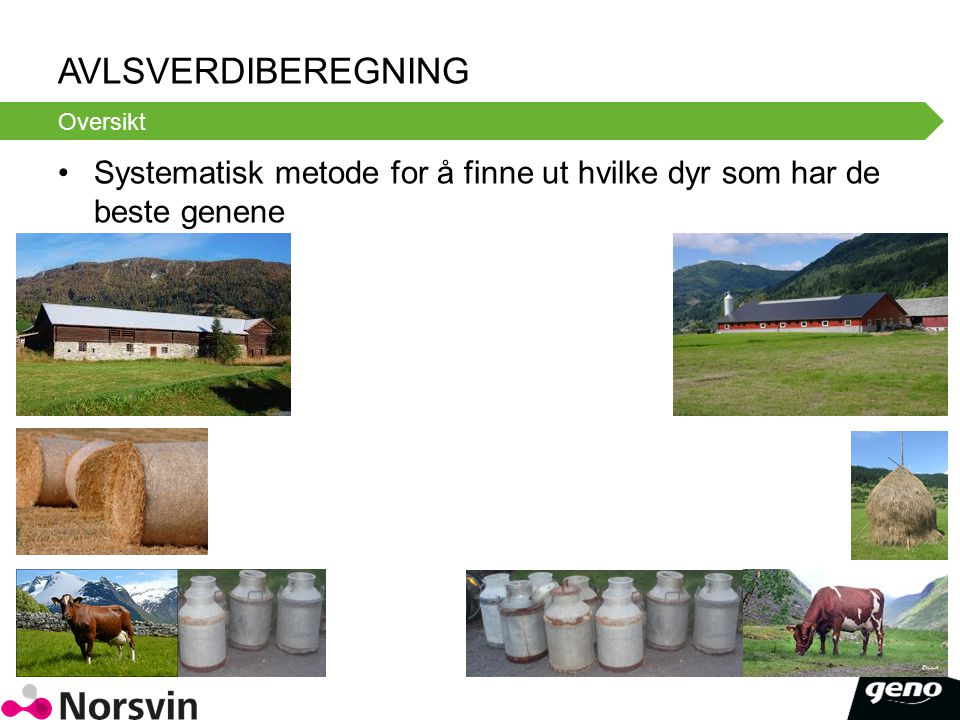 AVLSVERDIBEREGNING Systematisk metode for å finne ut hvilke dyr som har de beste genene Oversikt
