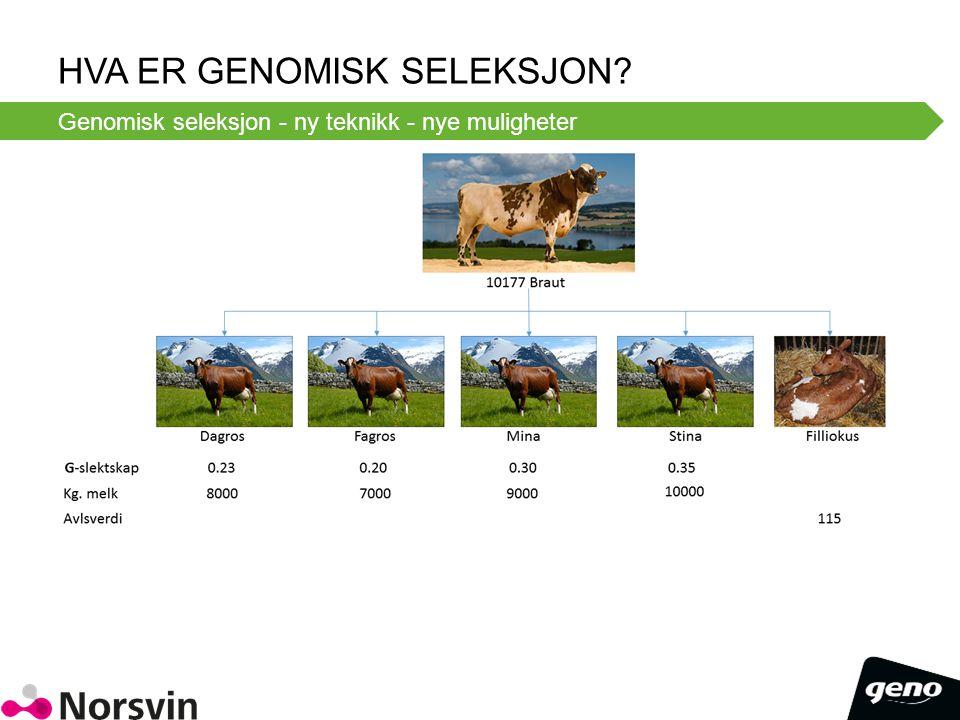 HVA ER GENOMISK SELEKSJON? Genomisk seleksjon - ny teknikk - nye muligheter