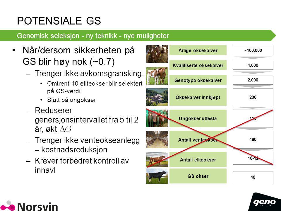 POTENSIALE GS Når/dersom sikkerheten på GS blir høy nok (~0.7) –Trenger ikke avkomsgransking, Omtrent 40 eliteokser blir selektert på GS-verdi Slutt p