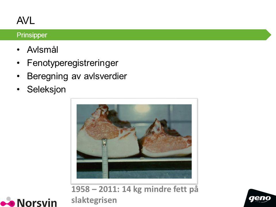 AVL Avlsmål Fenotyperegistreringer Beregning av avlsverdier Seleksjon Prinsipper 1958 – 2011: 14 kg mindre fett på slaktegrisen
