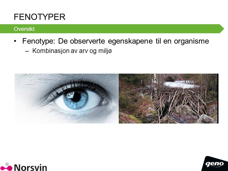 FENOTYPER Fenotype: De observerte egenskapene til en organisme –Kombinasjon av arv og miljø Oversikt