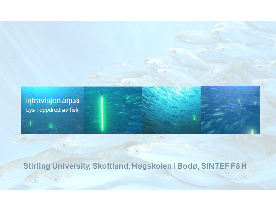 Intravision aqua Lys i oppdrett av fisk Stirling University, Skottland, Høgskolen i Bodø, SINTEF F&H