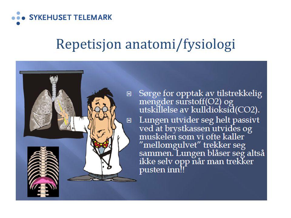 Repetisjon anatomi/fysiologi