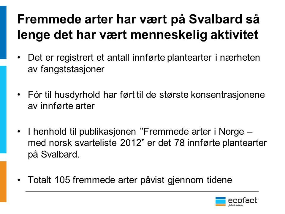 Fremmede arter har vært på Svalbard så lenge det har vært menneskelig aktivitet Det er registrert et antall innførte plantearter i nærheten av fangsts