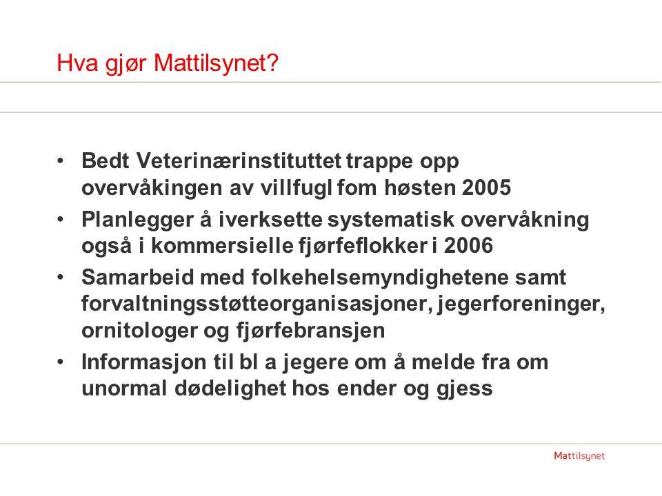 Hva gjør Mattilsynet.